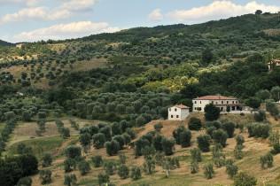 Azienda Agricola Ciacci